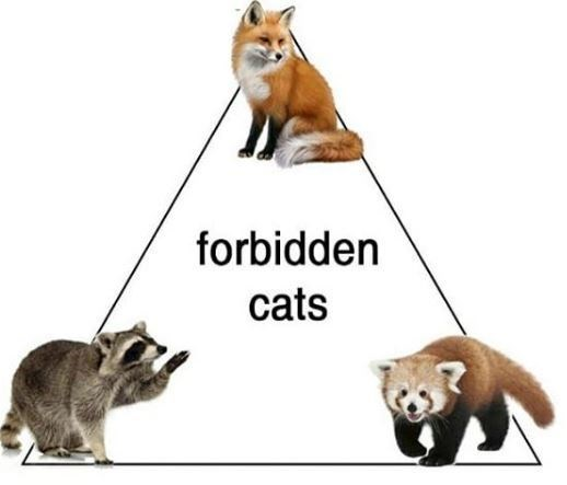 Vertebrate - forbidden cats