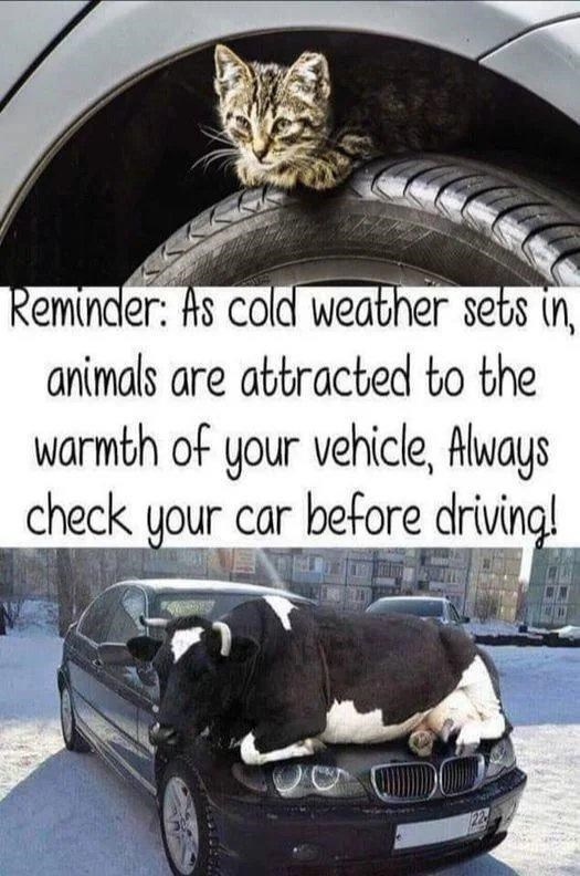Vehicle - Reminder: As cold weather sets in animals are attracted to the warmth of your vehicle, Always check your car before driving!