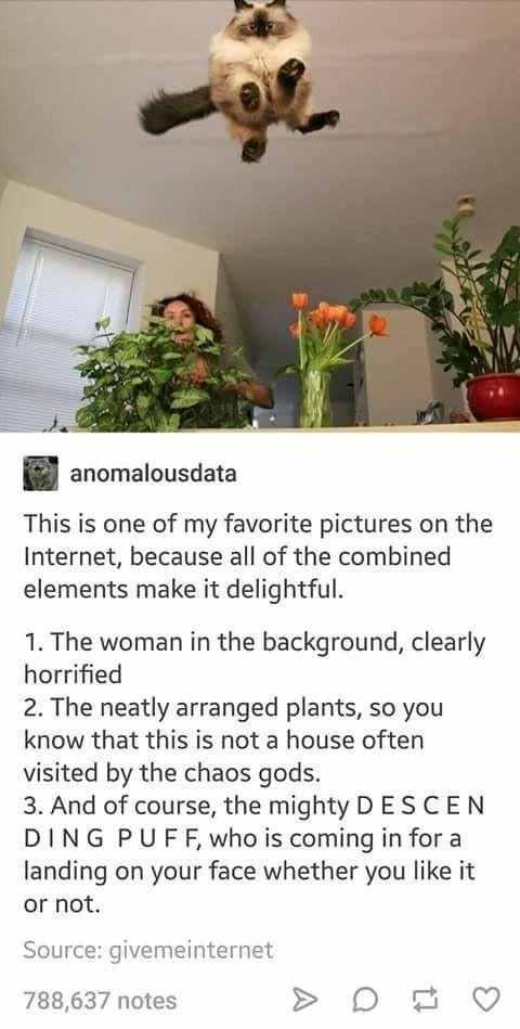 Text - anomalousdata This is one of my favorite pictures on the Internet, because all of the combined elements make it delightful. 1. The woman in the background, clearly horrified 2. The neatly arranged plants, so you know that this is not a house often visited by the chaos gods. 3. And of course, the mighty DESCEN DING PUFF, who is coming in for a landing on your face whether you like it or not. Source: givemeinternet 788,637 notes