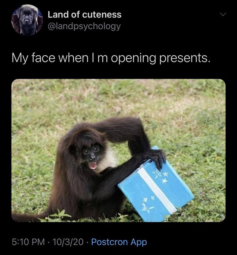 Adaptation - Land of cuteness @landpsychology My face when lm opening presents. 5:10 PM · 10/3/20 · Postcron App