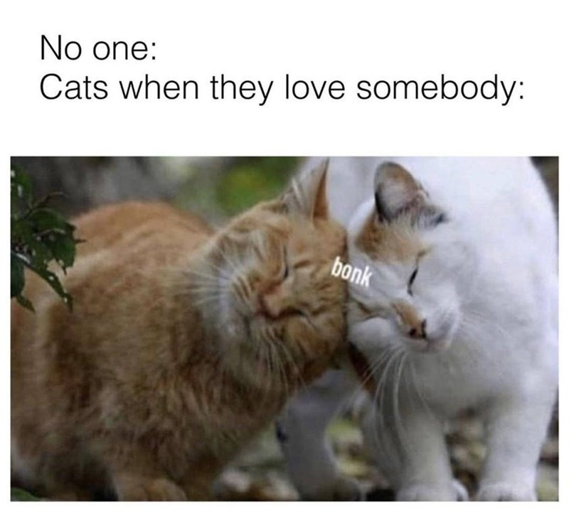 Cat - No one: Cats when they love somebody: bonk