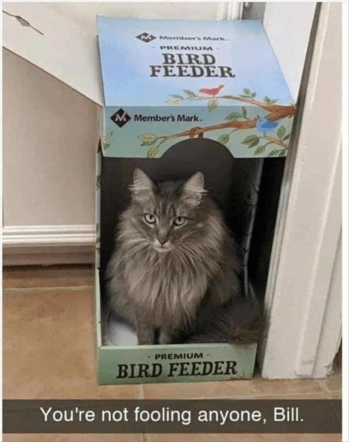 Cat - Member Mark PREMI UM BIRD FEEDER Member's Mark. PREMIUM· BIRD FEEDER You're not fooling anyone, Bill.