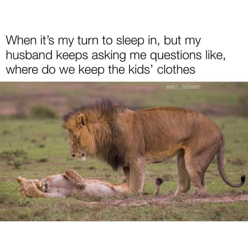 Wildlife - When it's my turn to sleep in, but my husband keeps asking me questions like, where do we keep the kids' clothes @NOT THENANNY
