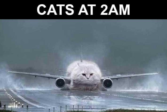 Aerospace engineering - CATS AT 2AM
