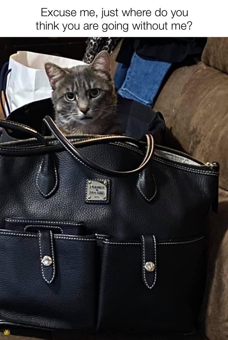 Bag - Excuse me, just where do you think you are going without me? TARLY 1RAON