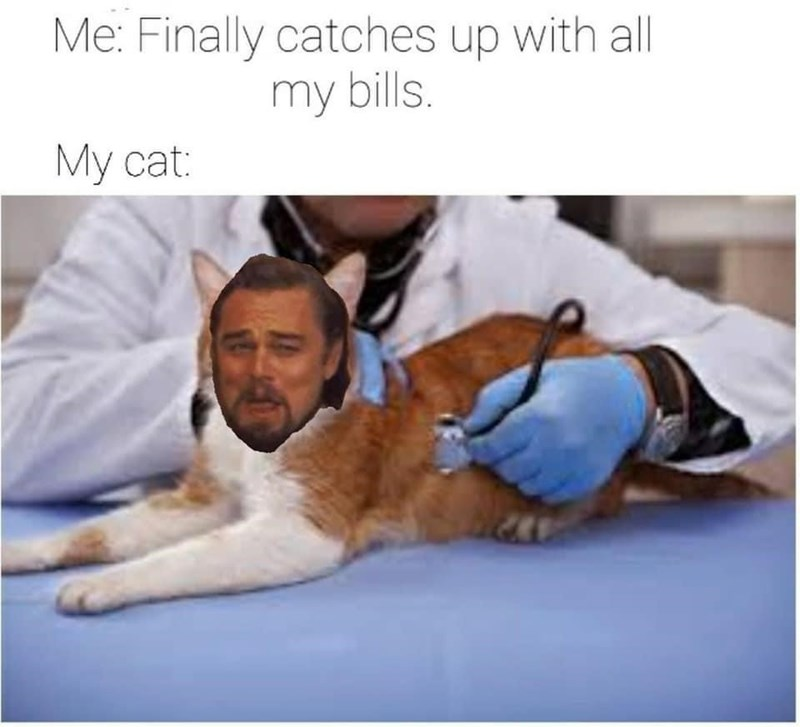 Head - Me: Finally catches up with al| my bills. My cat: