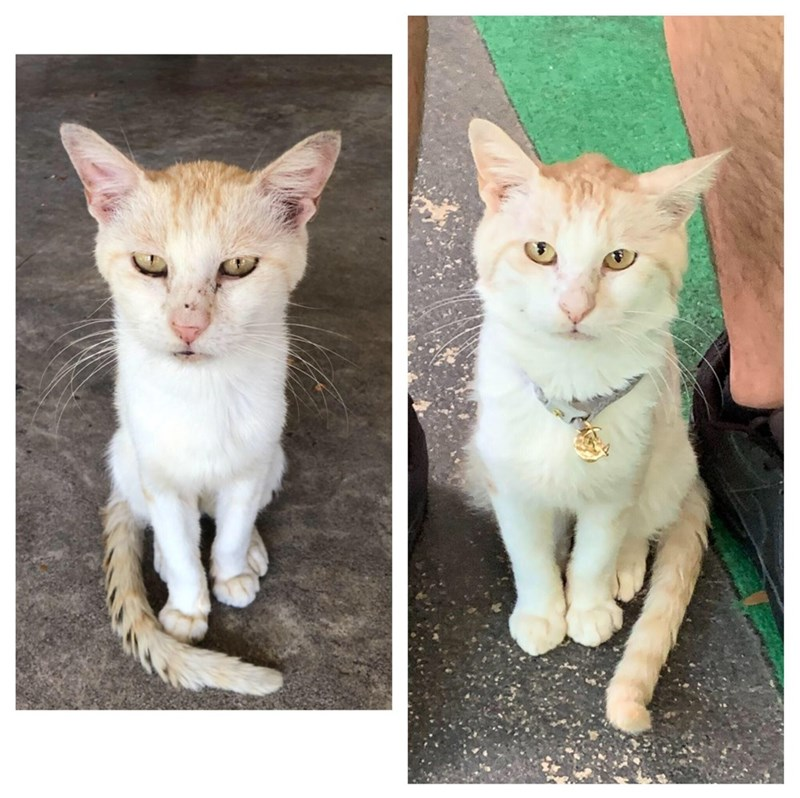 before and after adoption transformation stray cat
