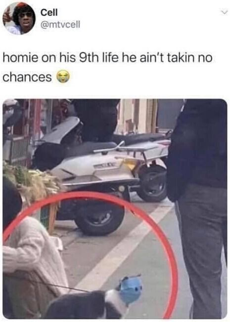 Transport - Cell @mtvcell homie on his 9th life he ain't takin no chances