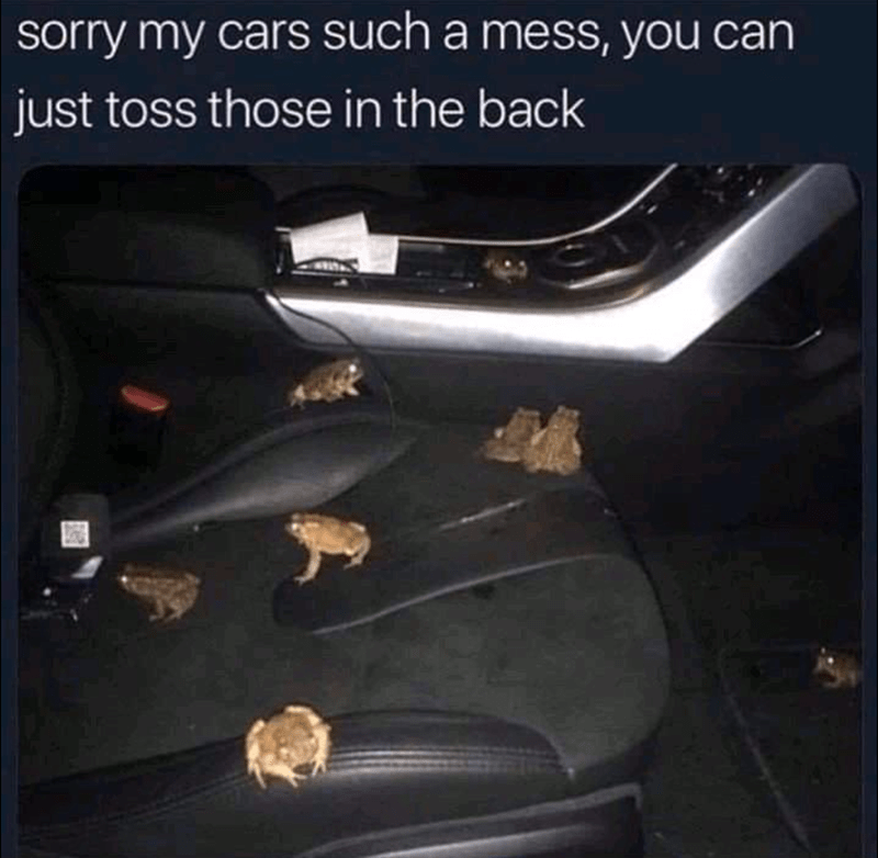 Funny Memes, Dank Memes, Silly Memes, Frog Memes | sorry my cars such a mess, you can just toss those in the back