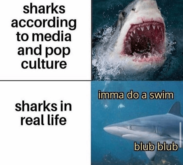 Great white shark - sharks according to media and pop culture imma do a swim sharks in real life blub blub