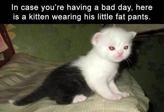 Cat - In case you're having a bad day, here is a kitten wearing his little fat pants.