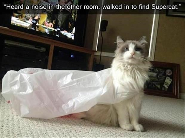 """Cat - """"Heard a noise in the other room, walked in to find Supercat."""""""