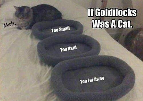 Footwear - If Goldilocks Was A Cat. Meh. Too Small Too Hard Too Far Away
