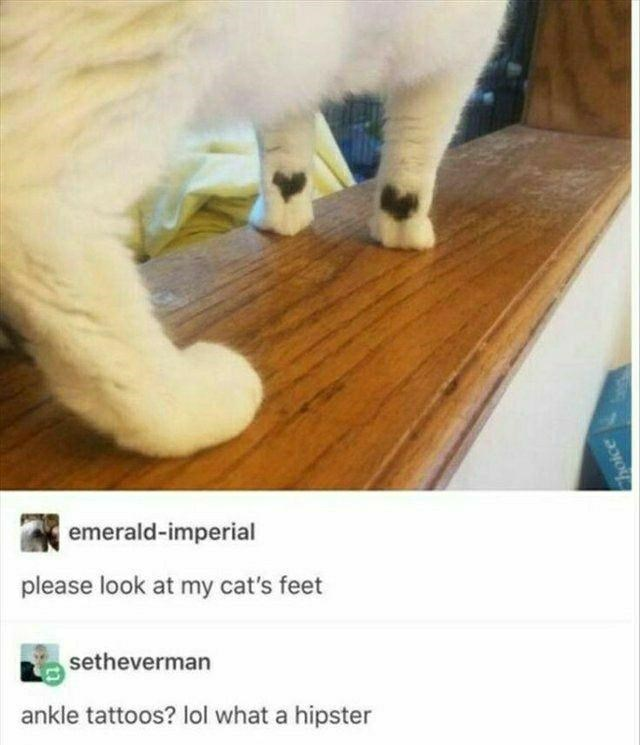 Cat - emerald-imperial please look at my cat's feet setheverman ankle tattoos? lol what a hipster hoice