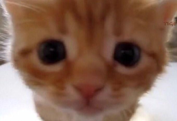 Cat - IGE