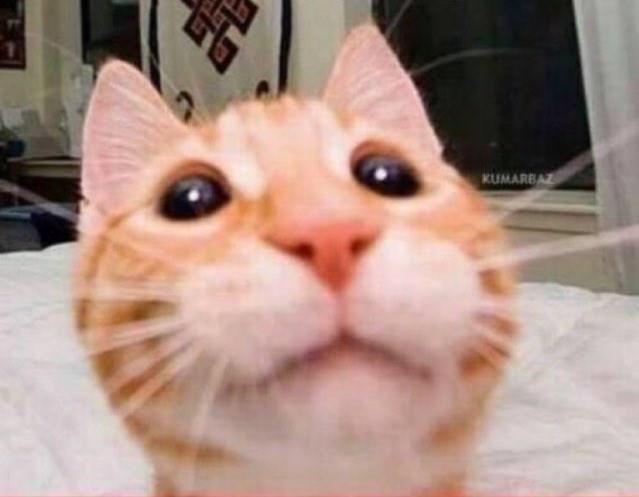 Cat - KUMARBAZ