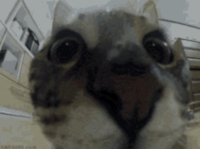 Snout - CIs.com