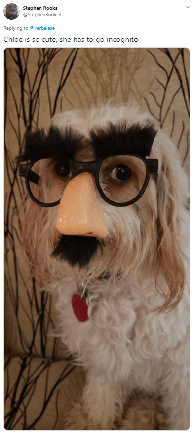 Facial hair - Stephen Rooks @StephenRooks3 34 Replying to @verbalese Chloe is so cute, she has to go incognito