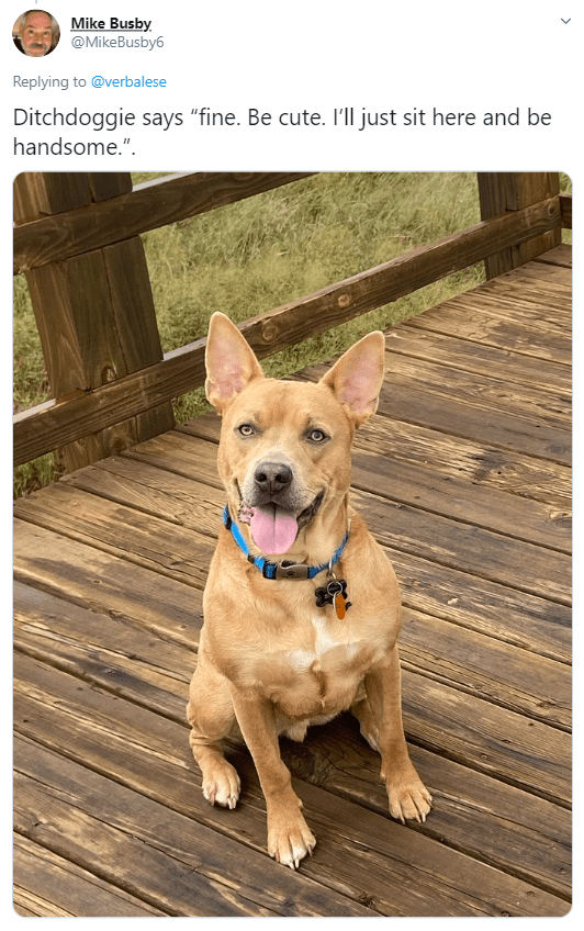 """Dog - Mike Busby. @MikeBusby6 Replying to @verbalese Ditchdoggie says """"fine. Be cute. I'll just sit here and be handsome.""""."""