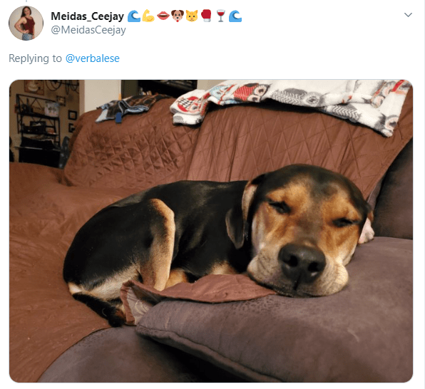 Dog - Meidas Ceejay CGO @MeidasCeejay Replying to @verbalese >