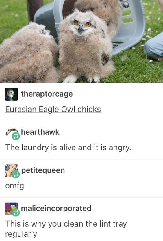 theraptorcage Eurasian Eagle Owl chicks hearthawk The laundry is alive and it is angry. petitequeen omfg maliceincorporated This is why you clean the lint tray regularly