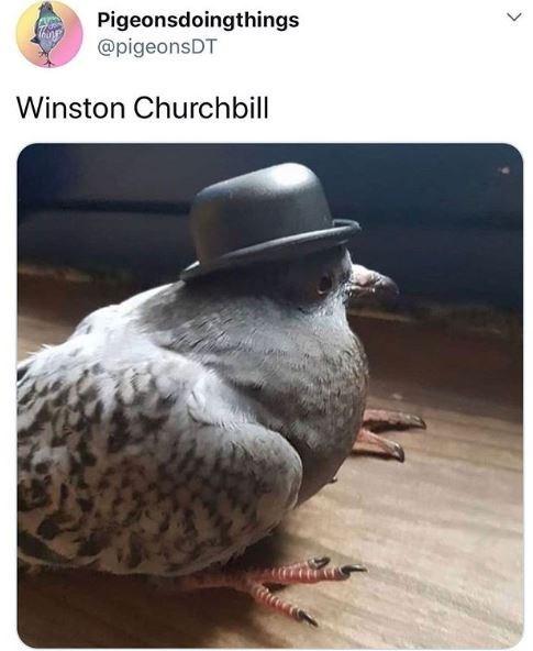 Bird - Pigeonsdoingthings @pigeonsDT Winston Churchbill >
