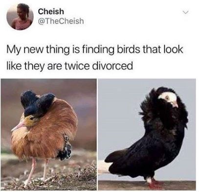 Bird - Cheish @TheCheish My new thing is finding birds that look like they are twice divorced