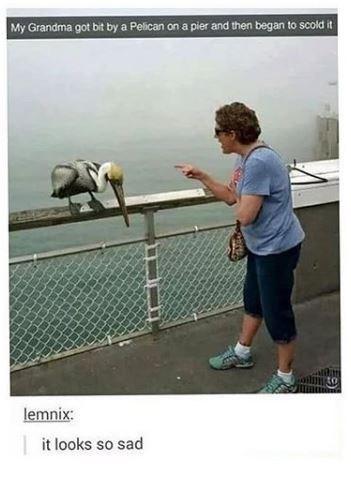 Net - My Grandma got bit by a Pelican on a pier and then began to scold it lemnix: it looks so sad