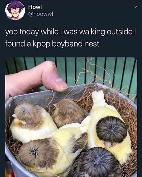 Elephant garlic - Howl @hoowwl yoo today while I was walking outside I found a kpop boyband nest >