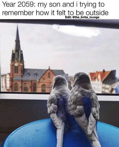 Sky - Year 2059: my son and i trying to remember how it felt to be outside Edit: @the_birbs lounge