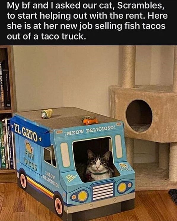 Transport - My bf and I asked our cat, Scrambles, to start helping out with the rent. Here she is at her new job selling fish tacos out of a taco truck. IMEOW DELICIOSO! FISH TACOS MEOW EL GATO DELICIO1O NOAH B NAGEMSA C ICAN RCE BAILE