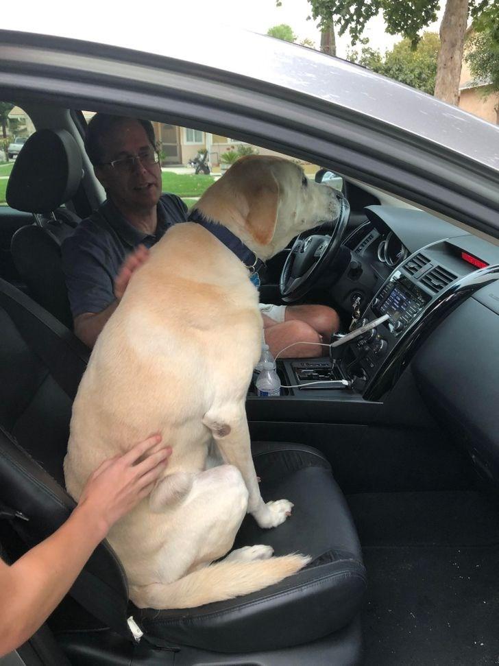 Vehicle door - KIT