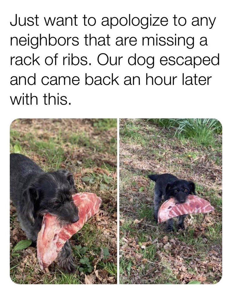 Dog - Just want to apologize to any neighbors that are missing a rack of ribs. Our dog escaped and came back an hour later with this.