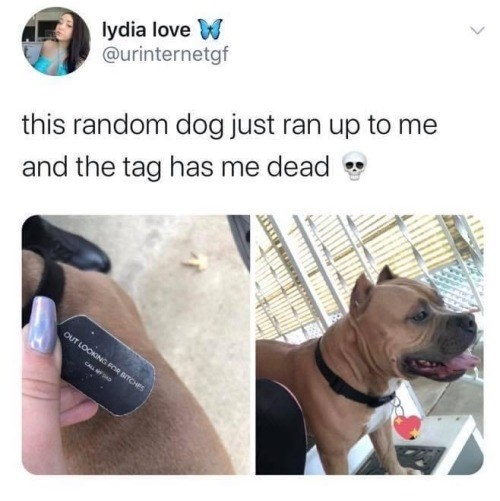 Face - lydia love W @urinternetgf this random dog just ran up to me and the tag has me dead OUT LOOKING FOR BITCHES CALL