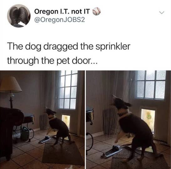 Human - Oregon I.T. not IT @OregonJOBS2 The dog dragged the sprinkler through the pet door...