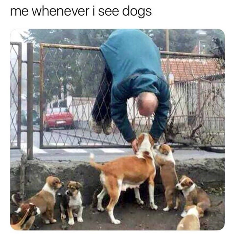 Mammal - me whenever i see dogs