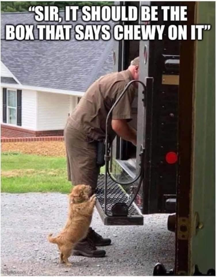 """Dog - """"SIR, IT SHOULD BE THE BOX THAT SAYS CHEWY ON IT"""" tmyp.com"""