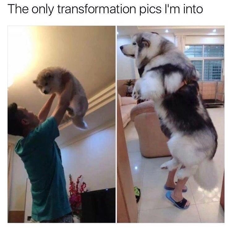 Canidae - The only transformation pics I'm into
