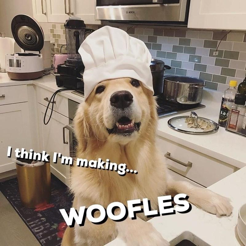 Dog - O BOSCH 动 I think I'm making... WOOFLES