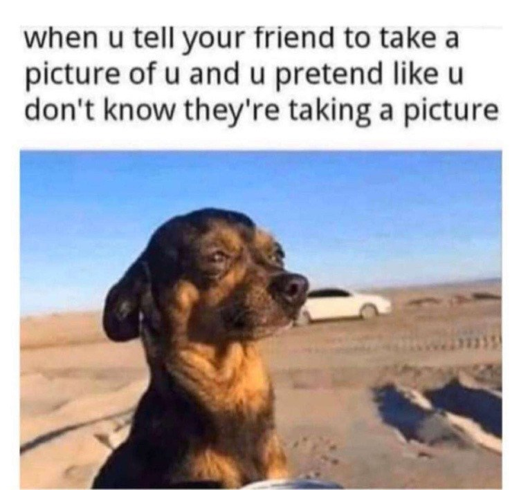 Dog - when u tell your friend to take a picture of u and u pretend like u don't know they're taking a picture
