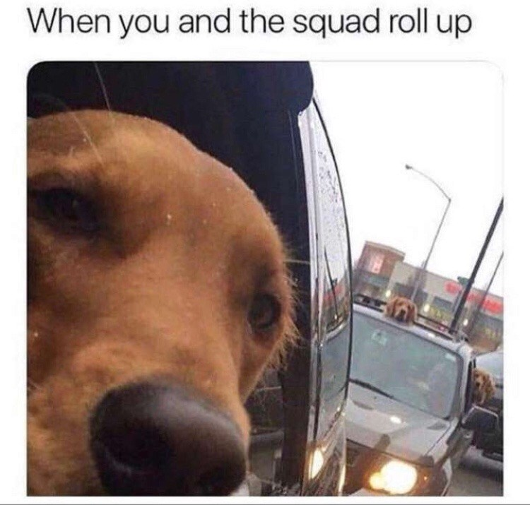 Dog - When you and the squad roll up