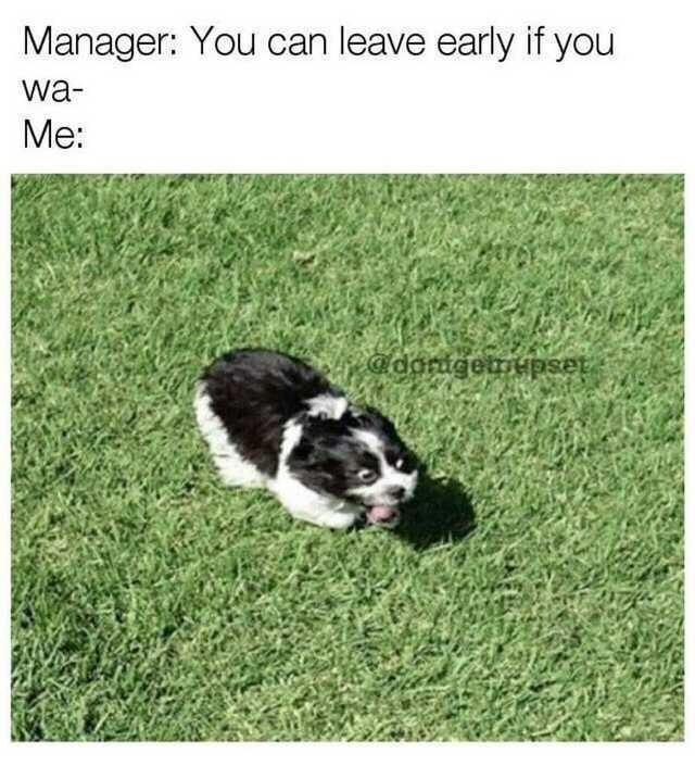 Dog - Manager: You can leave early if you wa- Me: @darugetmHpset