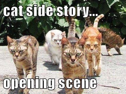 Cat - cat side story.. opening scene