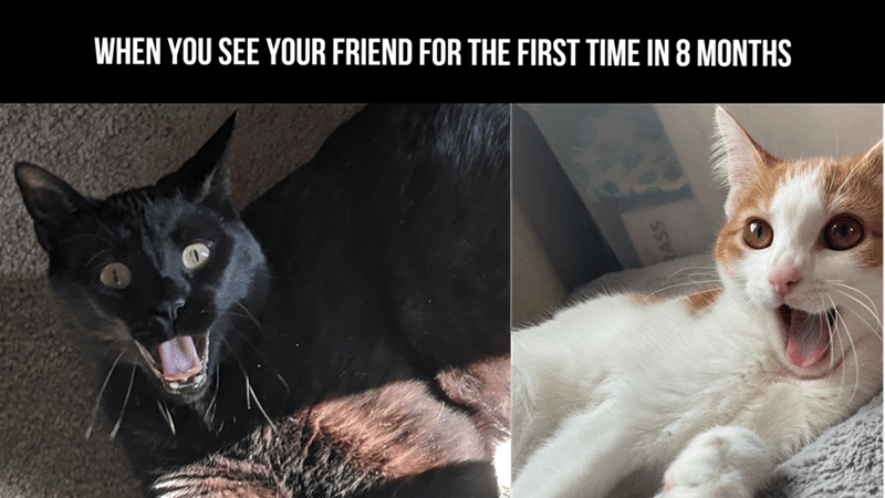 Cat - WHEN YOU SEE YOUR FRIEND FOR THE FIRST TIME IN 8 MONTHS 2ASS