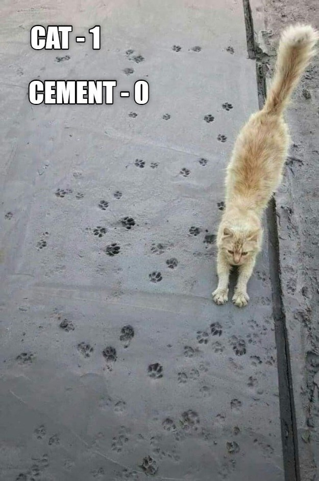 Canidae - CAT-1 CEMENT-0