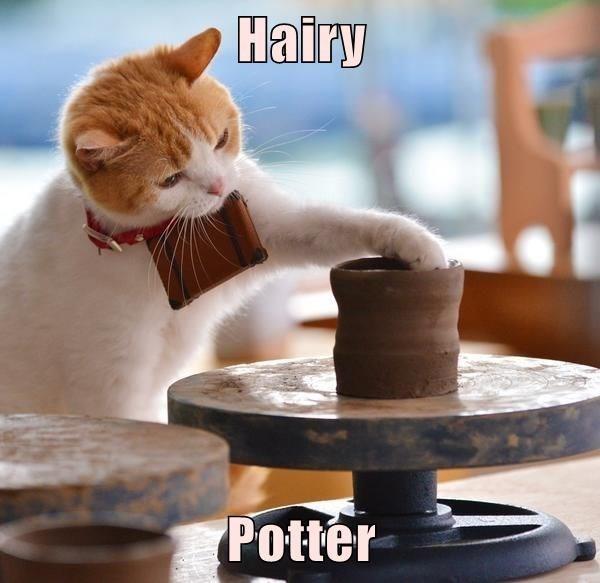 Cat - Hairy Potter