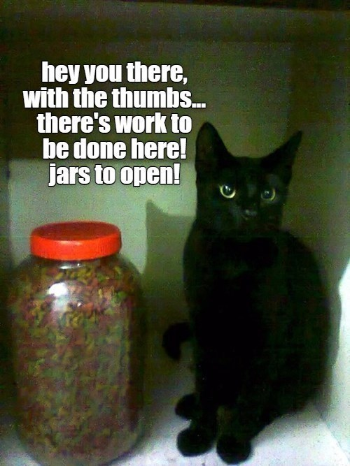 Cat - hey you there, with the thumbs. there's work to be done here! jars to open!