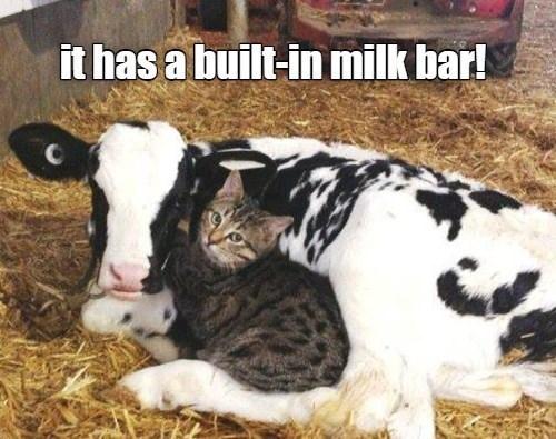 Vertebrate - it has a built-in milk bar!