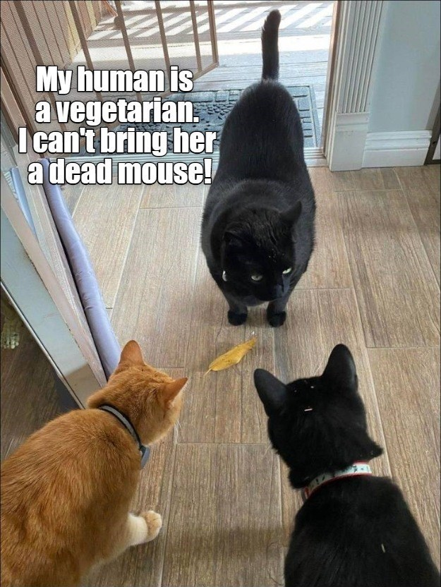 Cat - My human Is a vegetarian. I can't bring her a dead mouse!