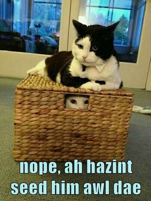 Cat - nope, ah hazint seed him awl dae